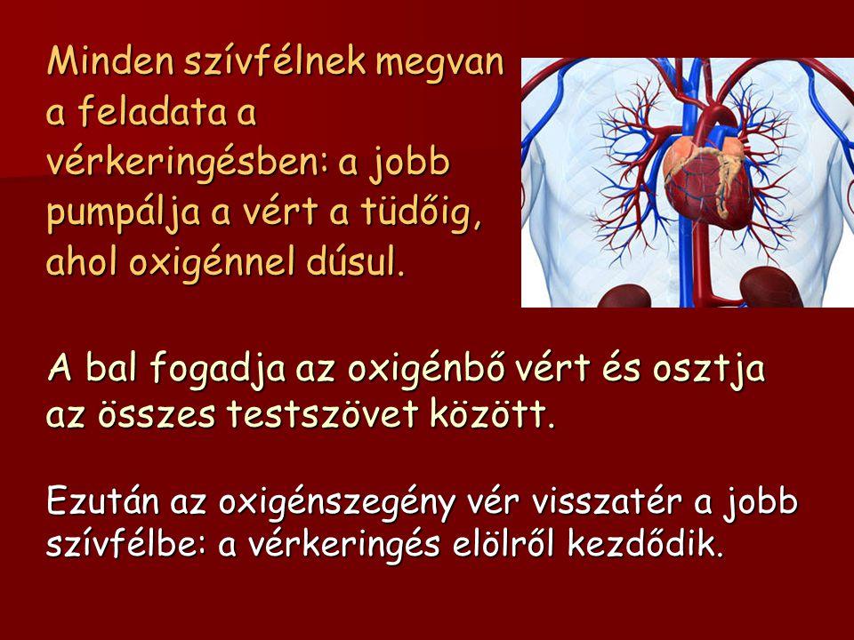 Minden szívfélnek megvan a feladata a vérkeringésben: a jobb pumpálja a vért a tüdőig, ahol oxigénnel dúsul. A bal fogadja az oxigénbő vért és osztja