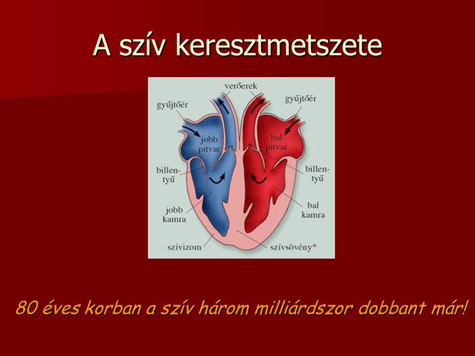 A szív keresztmetszete 80 éves korban a szív három milliárdszor dobbant már!