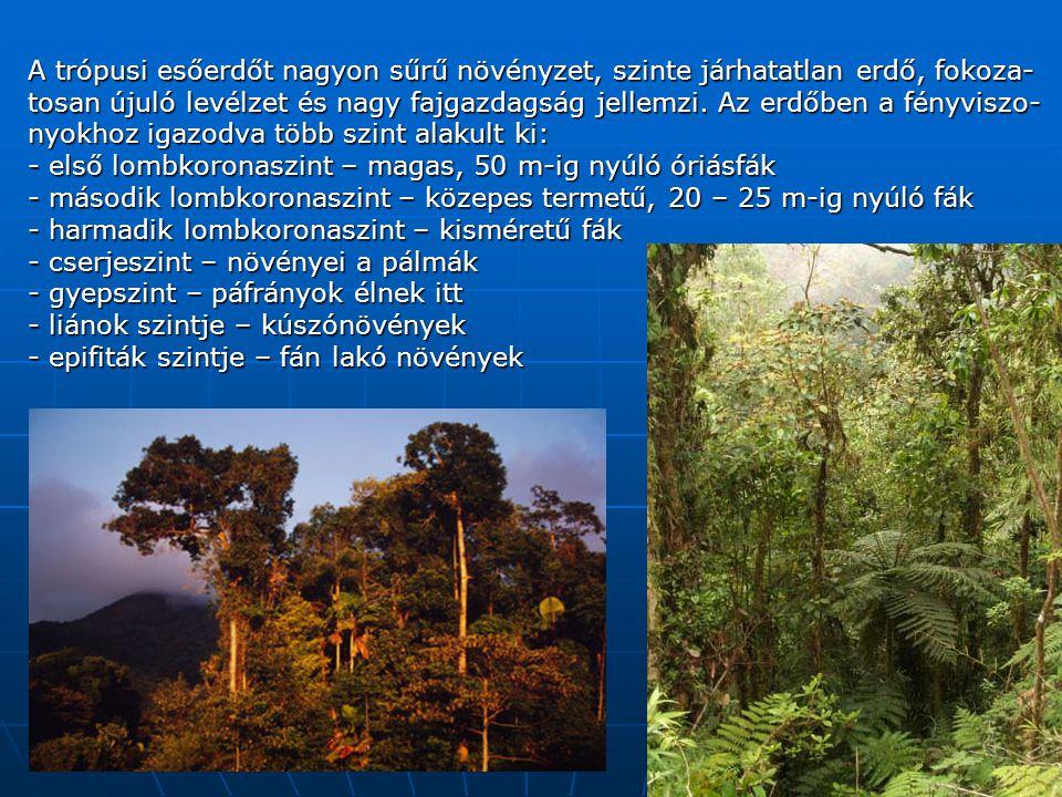 A trópusi esőerdőt nagyon sűrű növényzet, szinte járhatatlan erdő, fokoza- tosan újuló levélzet és nagy fajgazdagság jellemzi.