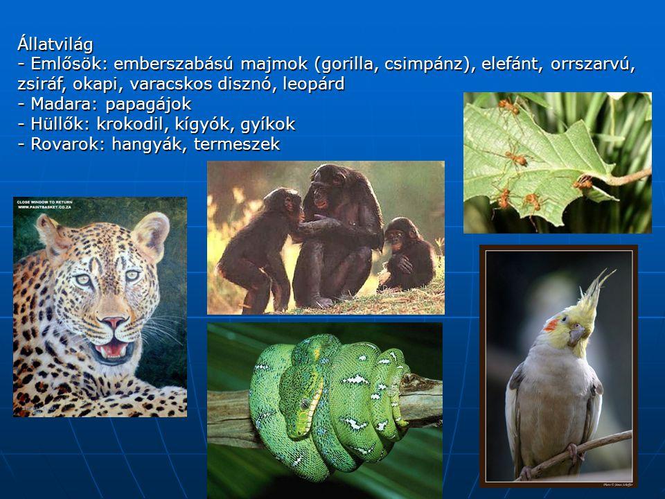 Állatvilág - Emlősök: emberszabású majmok (gorilla, csimpánz), elefánt, orrszarvú, zsiráf, okapi, varacskos disznó, leopárd - Madara: papagájok - Hüllők: krokodil, kígyók, gyíkok - Rovarok: hangyák, termeszek