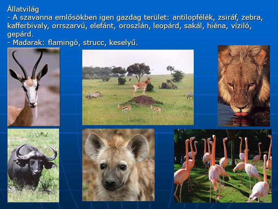 Állatvilág - A szavanna emlősökben igen gazdag terület: antilopfélék, zsiráf, zebra, kafferbivaly, orrszarvú, elefánt, oroszlán, leopárd, sakál, hiéna, víziló, gepárd.
