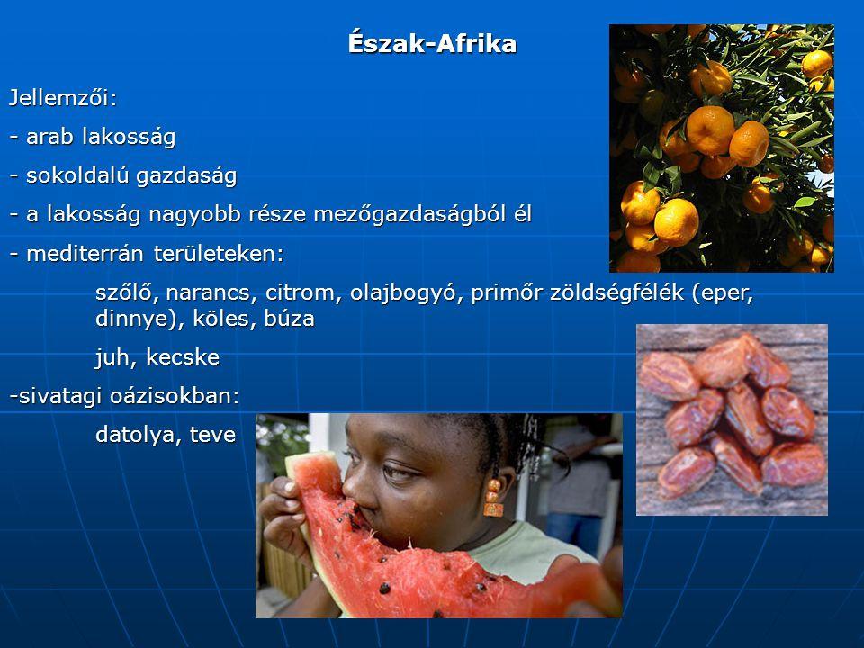 Észak-Afrika Jellemzői: - arab lakosság - sokoldalú gazdaság - a lakosság nagyobb része mezőgazdaságból él - mediterrán területeken: szőlő, narancs, citrom, olajbogyó, primőr zöldségfélék (eper, dinnye), köles, búza juh, kecske -sivatagi oázisokban: datolya, teve