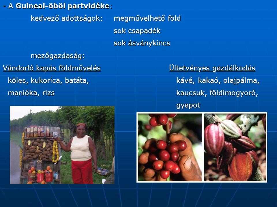 - A Guineai-öböl partvidéke: kedvező adottságok: megművelhető föld sok csapadék sok ásványkincs mezőgazdaság: Vándorló kapás földművelésÜltetvényes gazdálkodás köles, kukorica, batáta, kávé, kakaó, olajpálma, köles, kukorica, batáta, kávé, kakaó, olajpálma, manióka, rizs kaucsuk, földimogyoró, manióka, rizs kaucsuk, földimogyoró, gyapot gyapot