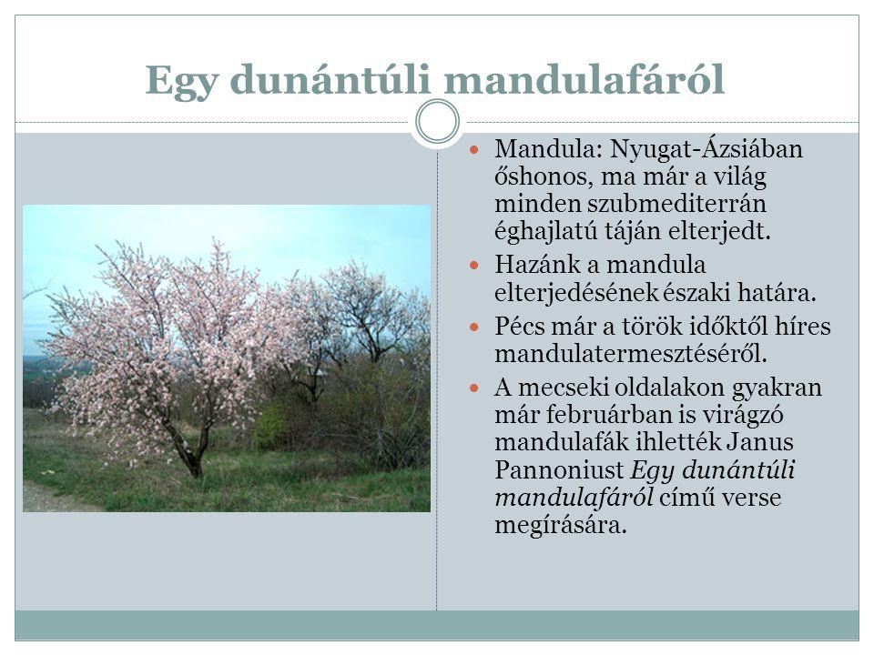 Egy dunántúli mandulafáról Mandula: Nyugat-Ázsiában őshonos, ma már a világ minden szubmediterrán éghajlatú táján elterjedt. Hazánk a mandula elterjed