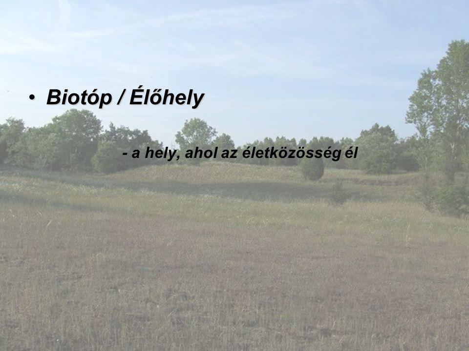 Biotóp / ÉlőhelyBiotóp / Élőhely - a hely, ahol az életközösség él