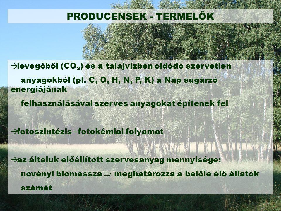 PRODUCENSEK - TERMELŐK  levegőből (CO 2 ) és a talajvízben oldódó szervetlen anyagokból (pl. C, O, H, N, P, K) a Nap sugárzó energiájának felhasználá
