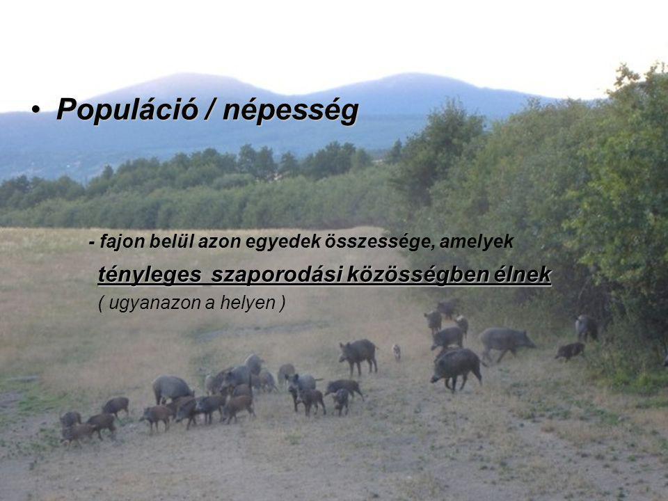 Populáció / népességPopuláció / népesség - fajon belül azon egyedek összessége, amelyek ténylegesszaporodási közösségben élnek tényleges szaporodási k