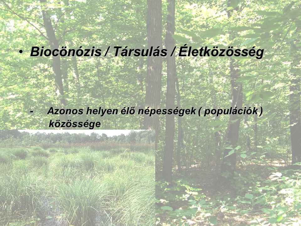 Biocönózis / Társulás / ÉletközösségBiocönózis / Társulás / Életközösség - Azonos helyen élő népességek ( populációk ) közössége Pl. Csalánosi Parkerd