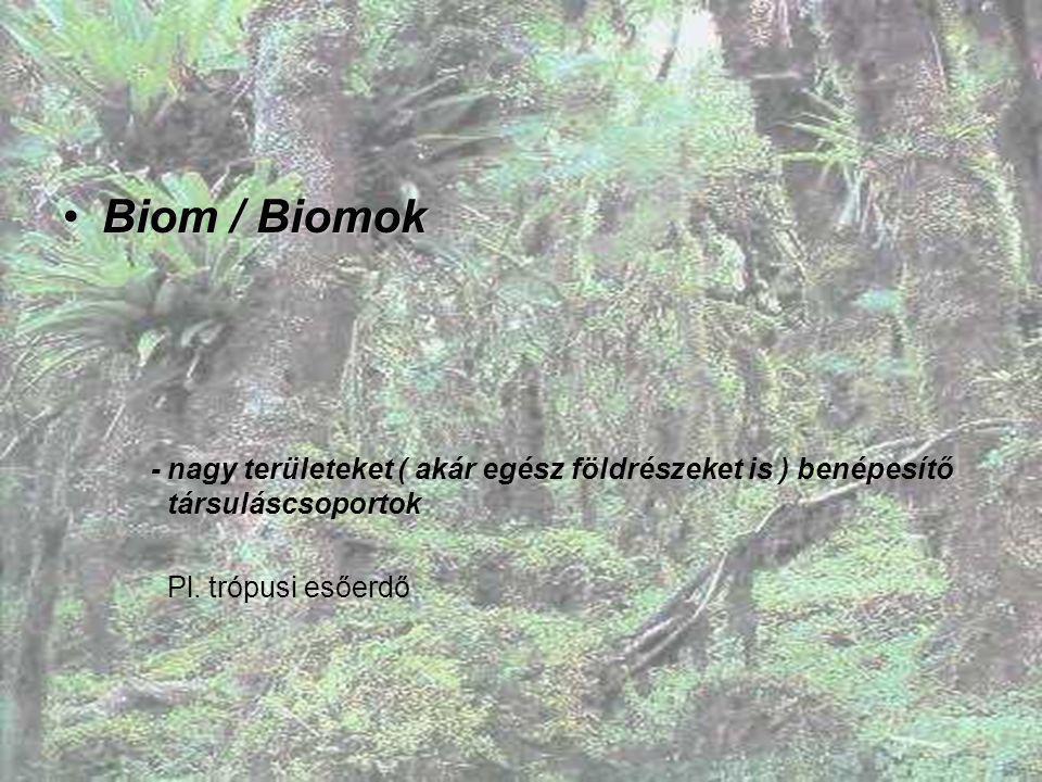 Biom / BiomokBiom / Biomok - nagy területeket ( akár egész földrészeket is ) benépesítő társuláscsoportok Pl. trópusi esőerdő