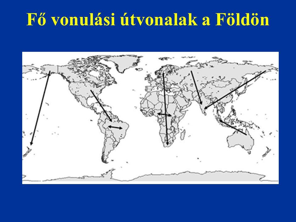 Fő vonulási útvonalak a Földön