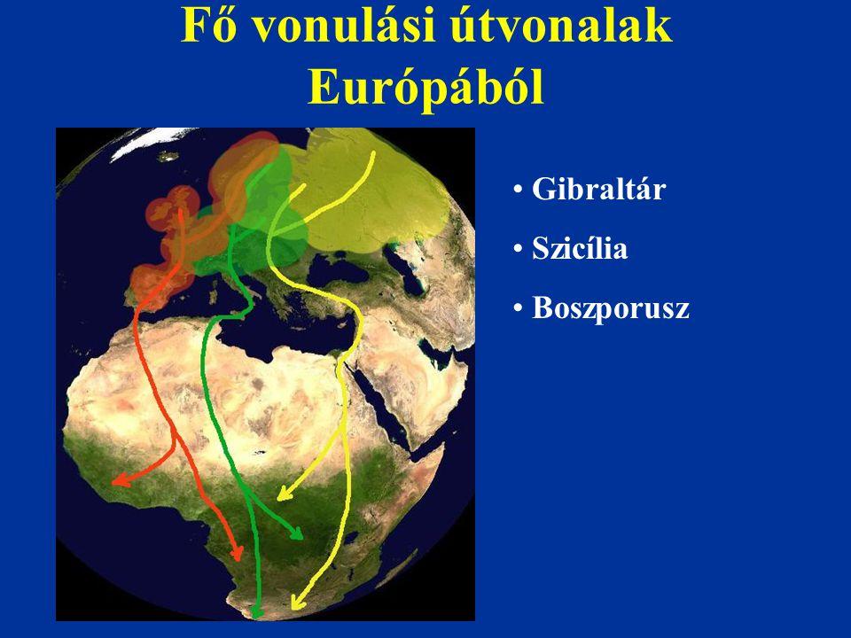 Fő vonulási útvonalak Európából Gibraltár Szicília Boszporusz