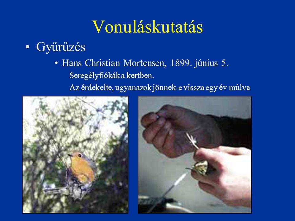 Vonuláskutatás Gyűrűzés Hans Christian Mortensen, 1899. június 5. Seregélyfiókák a kertben. Az érdekelte, ugyanazok jönnek-e vissza egy év múlva