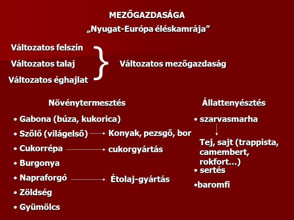 """MEZŐGAZDASÁGA """"Nyugat-Európa éléskamrája"""" Változatos éghajlat Változatos talaj Változatos felszín } Változatos mezőgazdaság Növénytermesztés Gabona (b"""
