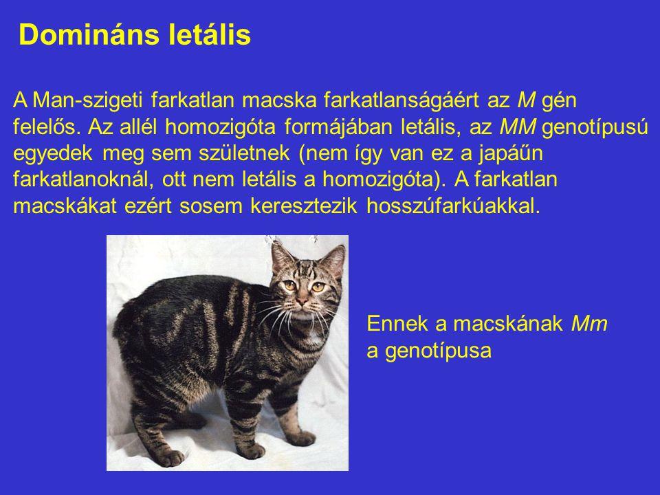 Domináns letális A Man-szigeti farkatlan macska farkatlanságáért az M gén felelős. Az allél homozigóta formájában letális, az MM genotípusú egyedek me