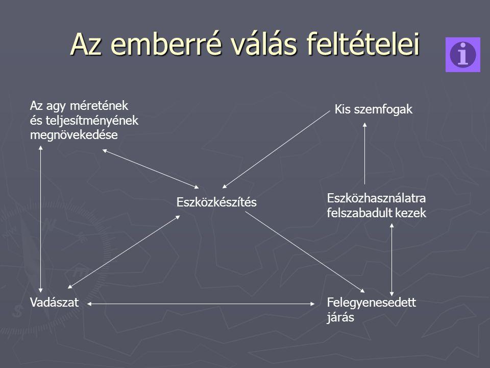 Az emberré válás feltételei Az agy méretének és teljesítményének megnövekedése Vadászat Eszközkészítés Kis szemfogak Eszközhasználatra felszabadult ke