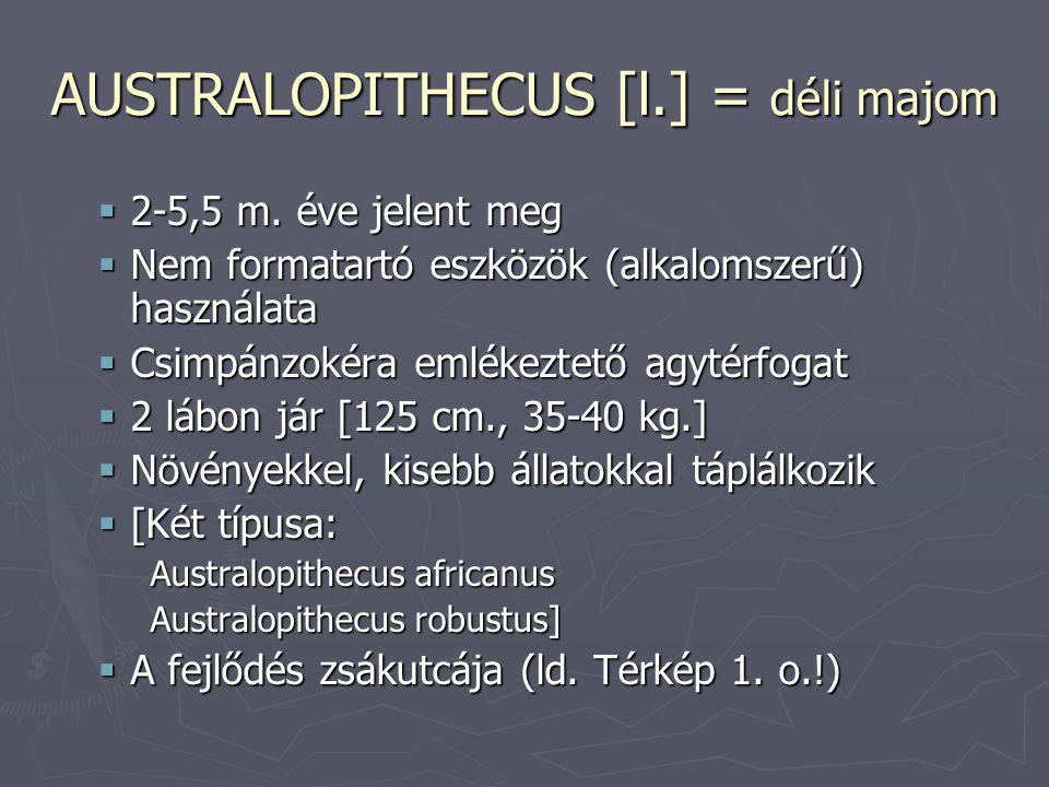 A fejlődés stádiumai II.ÉV 2 m. Homo habilis 1,5 m.