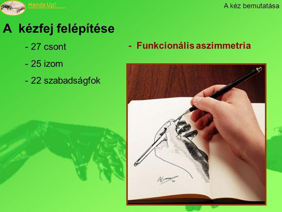 Hands Up! - Funkcionális aszimmetria A kéz bemutatása A kézfej felépítése - 27 csont - 25 izom - 22 szabadságfok