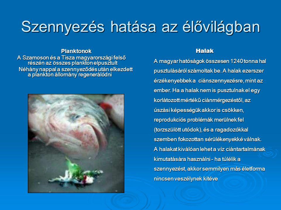 Szennyezés hatása az élővilágban Planktonok A Szamoson és a Tisza magyarországi felső részén az összes plankton elpusztult Néhány nappal a szennyeződé