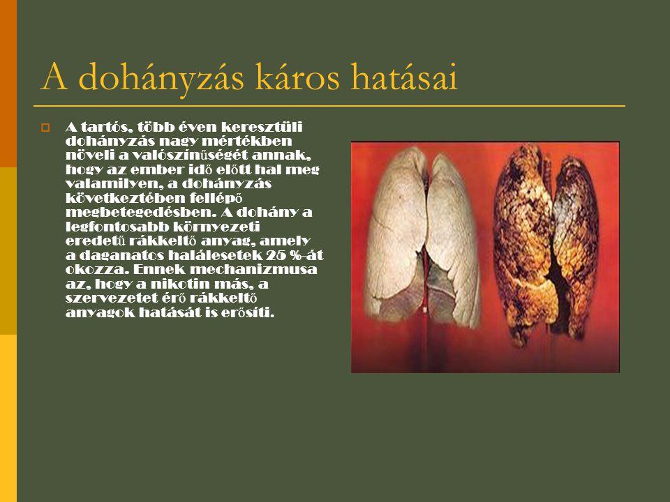 A dohányzás káros hatásai  A tartós, több éven keresztüli dohányzás nagy mértékben növeli a valószín ű ségét annak, hogy az ember id ő el ő tt hal me