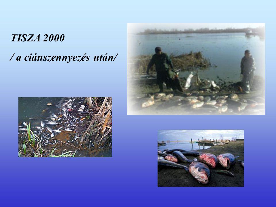 TISZA 2000 / a ciánszennyezés után/