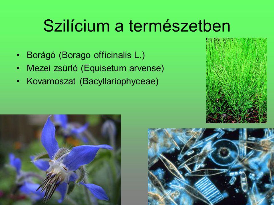Szilícium a természetben Borágó (Borago officinalis L.) Mezei zsúrló (Equisetum arvense) Kovamoszat (Bacyllariophyceae)