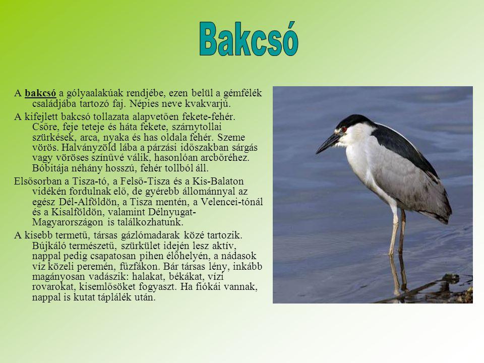 A bakcsó a gólyaalakúak rendjébe, ezen belül a gémfélék családjába tartozó faj.