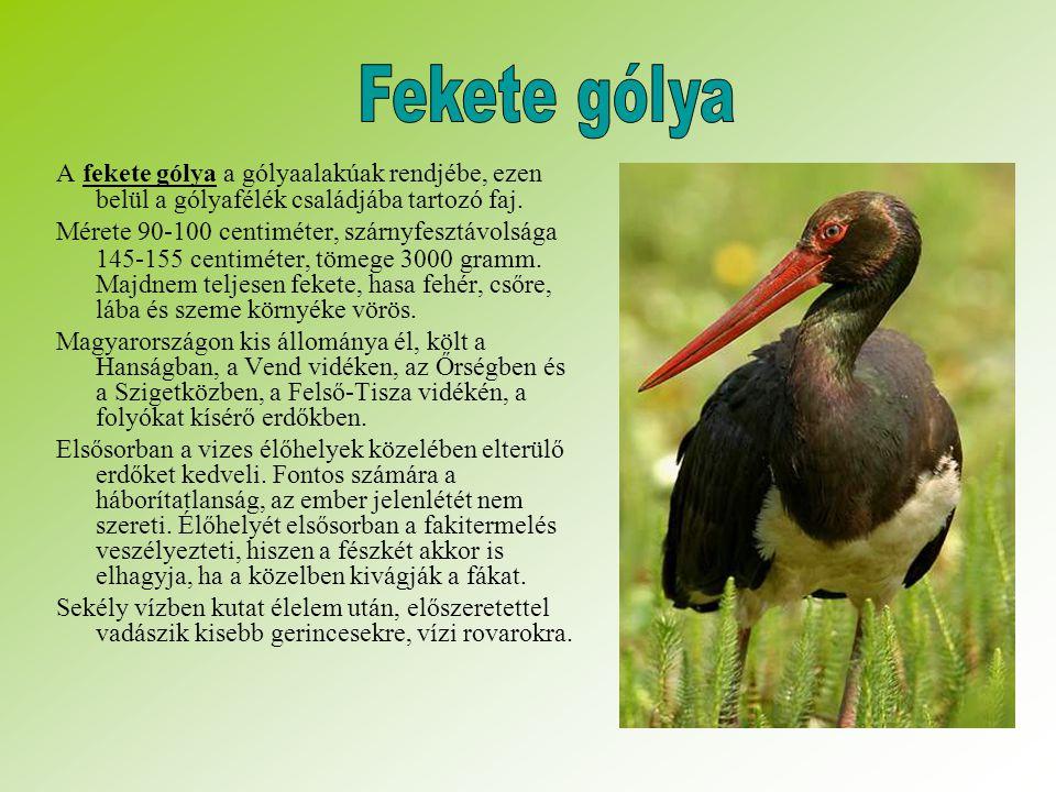 A fekete gólya a gólyaalakúak rendjébe, ezen belül a gólyafélék családjába tartozó faj.