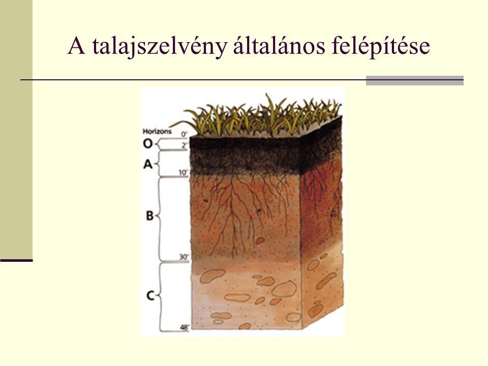 A talajszelvény általános felépítése