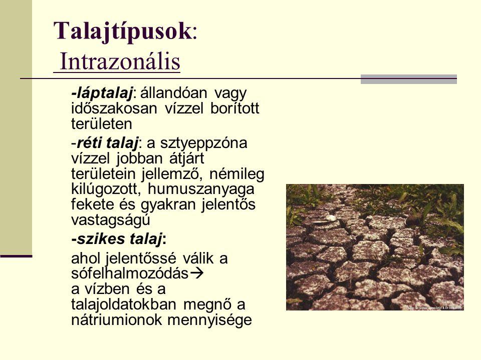 Talajtípusok: Intrazonális -láptalaj: állandóan vagy időszakosan vízzel borított területen -réti talaj: a sztyeppzóna vízzel jobban átjárt területein jellemző, némileg kilúgozott, humuszanyaga fekete és gyakran jelentős vastagságú -szikes talaj: ahol jelentőssé válik a sófelhalmozódás  a vízben és a talajoldatokban megnő a nátriumionok mennyisége