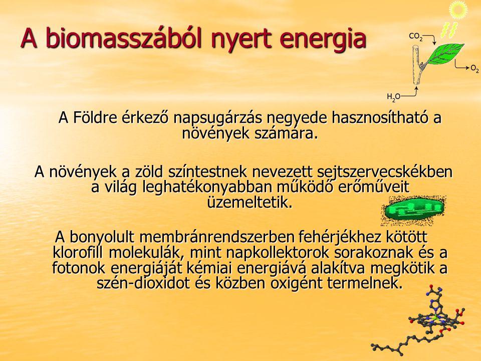 A biomasszából nyert energia A Földre érkező napsugárzás negyede hasznosítható a növények számára. A növények a zöld színtestnek nevezett sejtszervecs