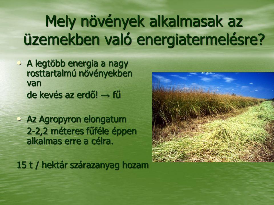 Mely növények alkalmasak az üzemekben való energiatermelésre? A legtöbb energia a nagy rosttartalmú növényekben van A legtöbb energia a nagy rosttarta