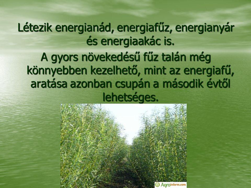 Létezik energianád, energiafűz, energianyár és energiaakác is. A gyors növekedésű fűz talán még könnyebben kezelhető, mint az energiafű, aratása azonb