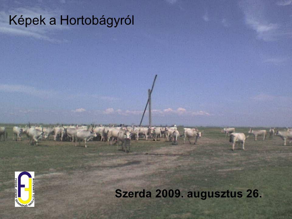 Szerda 2009. augusztus 26. Képek a Hortobágyról