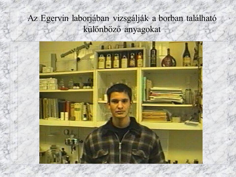 Az Egervin laborjában vizsgálják a borban található különböző anyagokat
