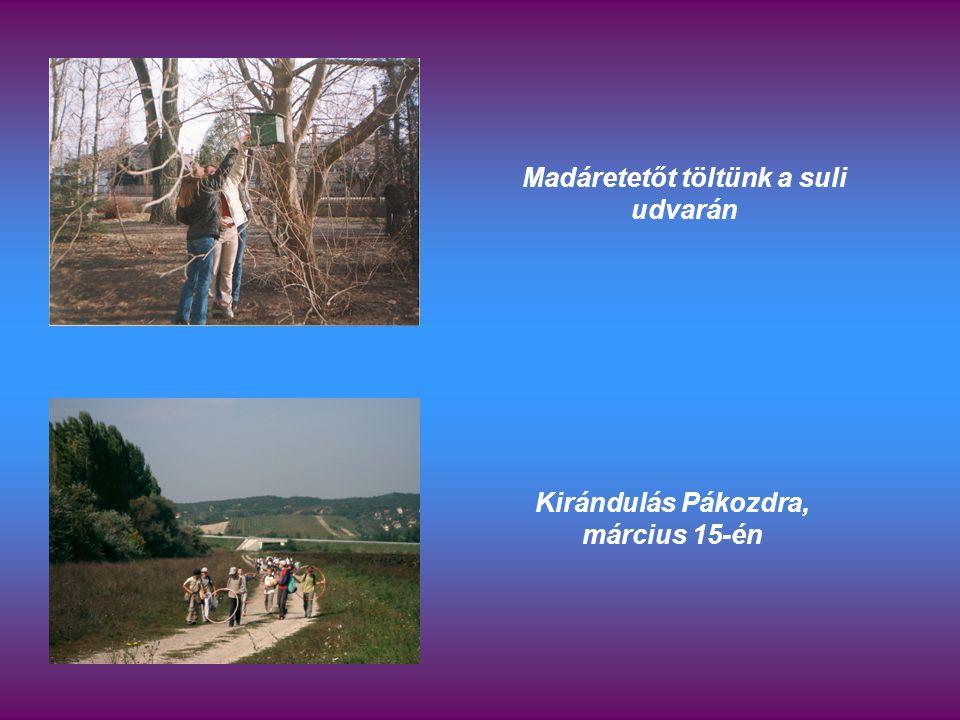 Madáretetőt töltünk a suli udvarán Kirándulás Pákozdra, március 15-én