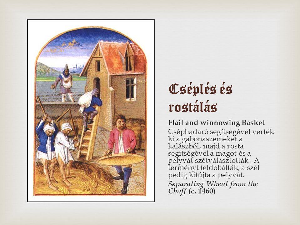 Cséplés és rostálás Flail and winnowing Basket Cséphadaró segítségével verték ki a gabonaszemeket a kalászból, majd a rosta segítségével a magot és a