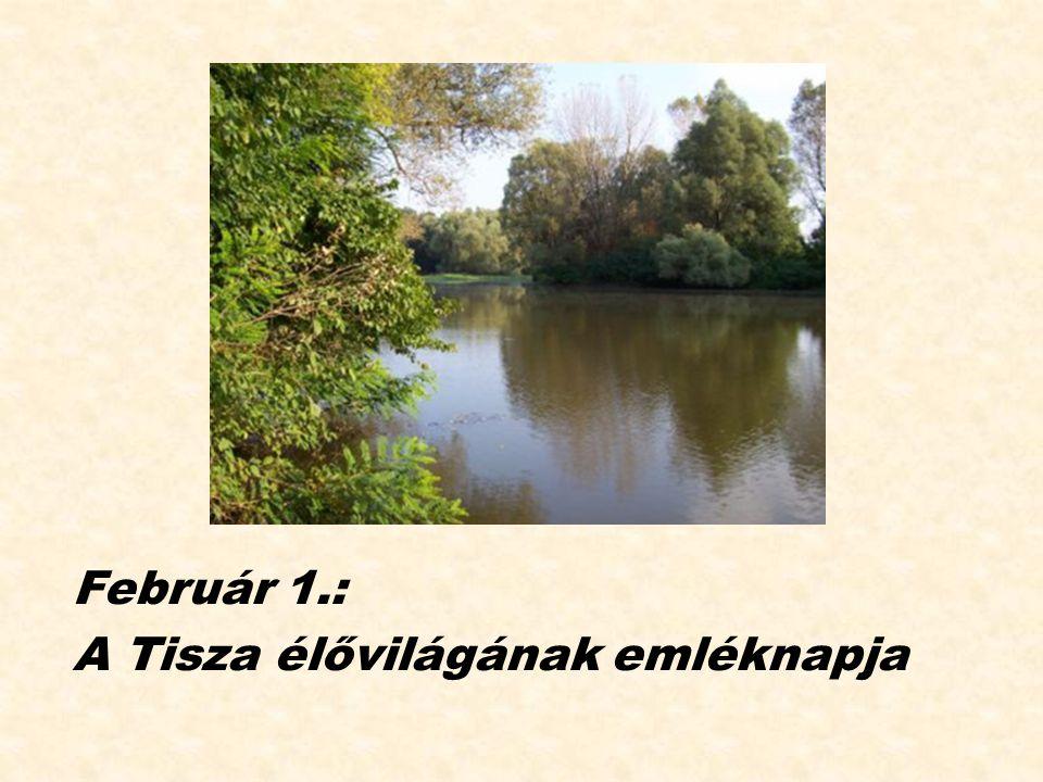 Február 1.: A Tisza élővilágának emléknapja