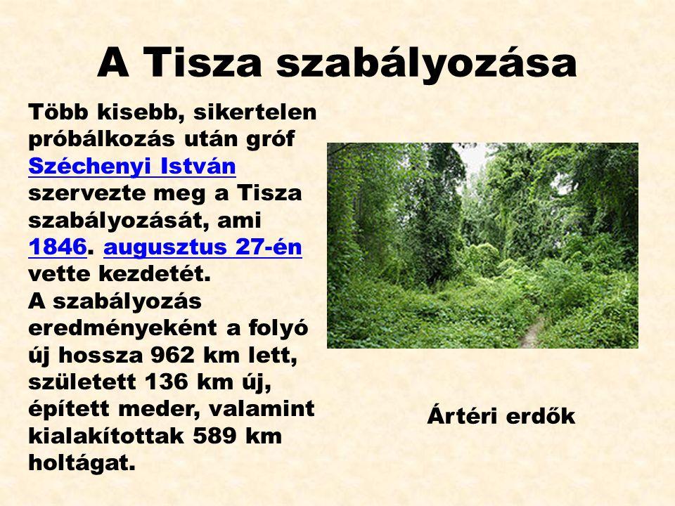 A Tisza szabályozása Több kisebb, sikertelen próbálkozás után gróf Széchenyi István szervezte meg a Tisza szabályozását, ami 1846. augusztus 27-én vet