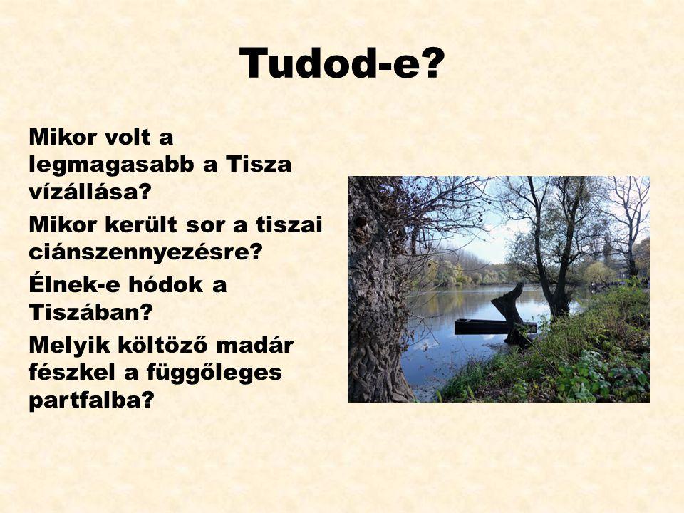 Tudod-e? Mikor volt a legmagasabb a Tisza vízállása? Mikor került sor a tiszai ciánszennyezésre? Élnek-e hódok a Tiszában? Melyik költöző madár fészke