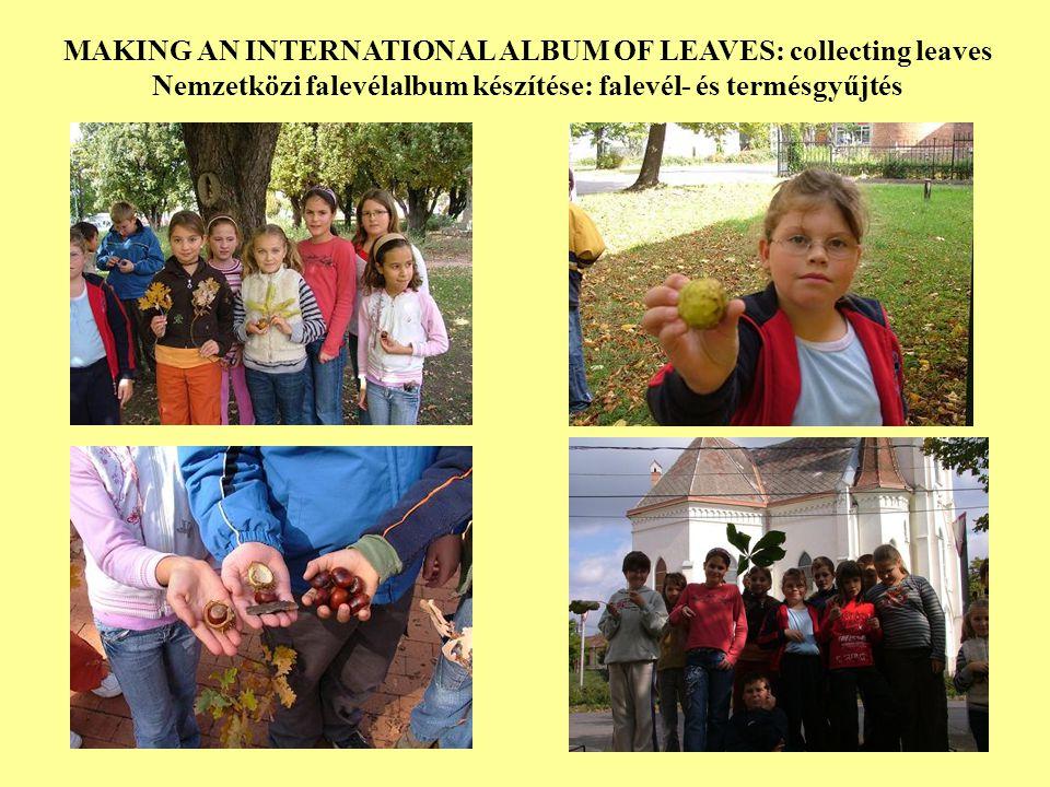 MAKING AN INTERNATIONAL ALBUM OF LEAVES:collecting leaves Nemzetközi falevélalbum készítés: falevél- és termésgyűjtés