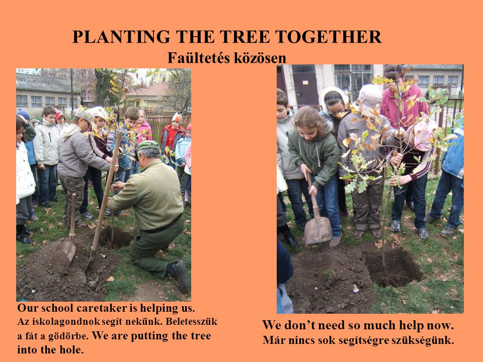 WE ARE PLANTING THE TREE Ültetjük a fát We are holding the tree to be straight and shoveling.