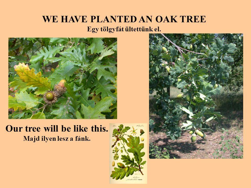 WE HAVE PLANTED AN OAK TREE Egy tölgyfát ültettünk el.