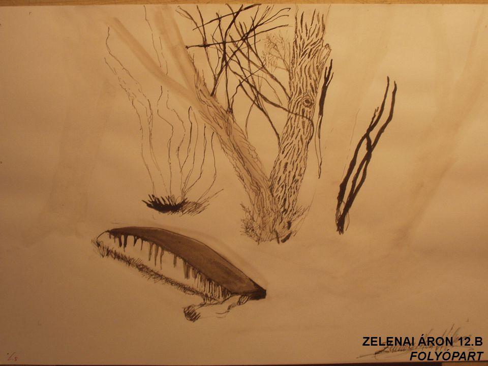 ZELENAI ÁRON 12.B FOLYÓPART