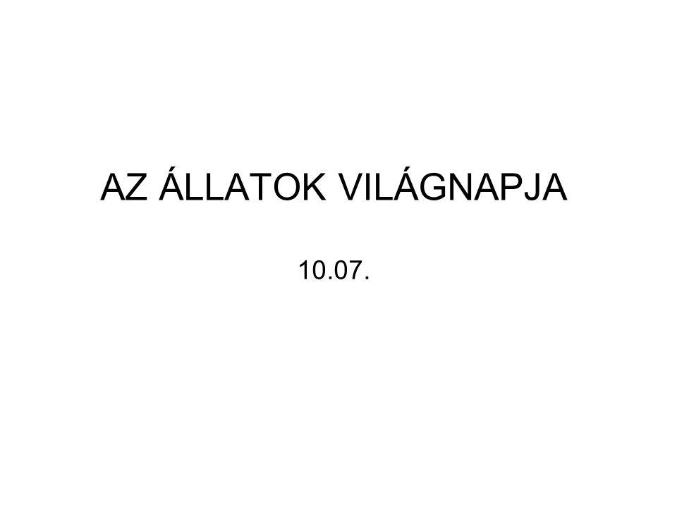 AZ ÁLLATOK VILÁGNAPJA 10.07.