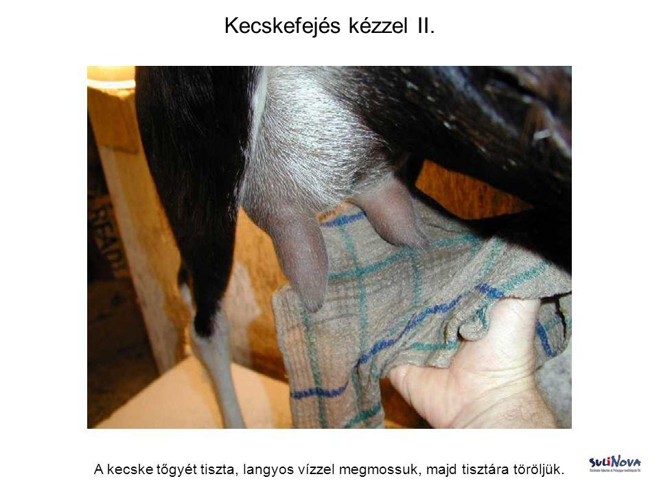 Kecskefejés kézzel III.