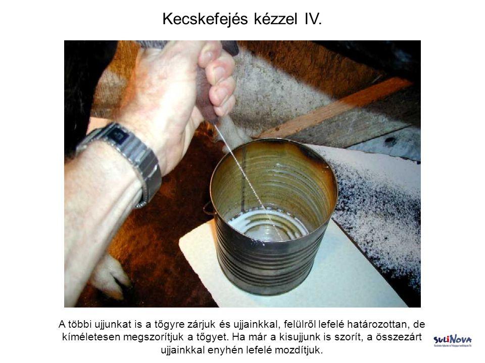 Kecskefejés kézzel IV. A többi ujjunkat is a tőgyre zárjuk és ujjainkkal, felülről lefelé határozottan, de kíméletesen megszorítjuk a tőgyet. Ha már a