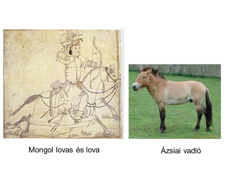 Mongol lovas és lova Ázsiai vadló