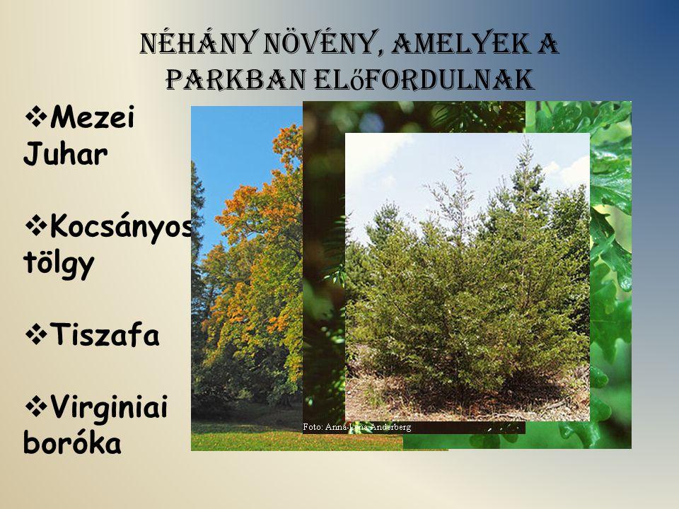 Néhány növény, amelyek a parkban el ő fordulnak  Mezei Juhar  Kocsányos tölgy  Tiszafa  Virginiai boróka