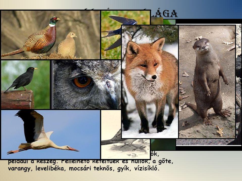 A Zagyva állatvilága A környék állatvilágában a nagyobb mezei és erdei vadak közül legelterjedtebb az őz, a róka, a nyúl, kisebb ragadozók, a nyest és a görény, s a Zagyvában itt-ott a vidra.