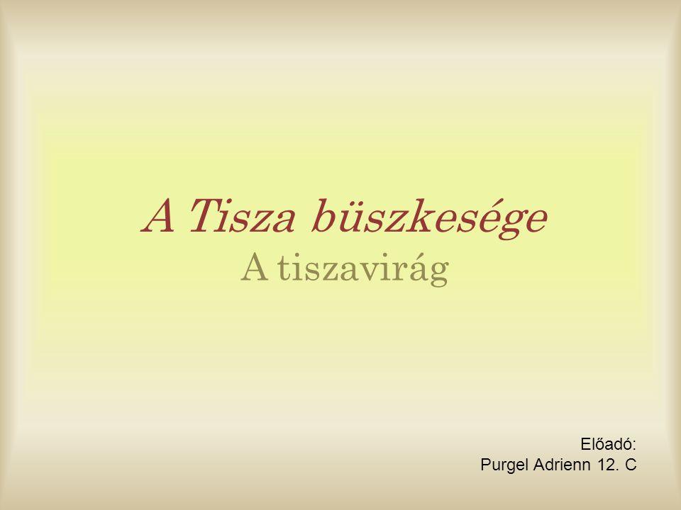 - Arisztotelész tett először említést róluk - a sumérok vízi szöcskeként ismerték - több faja élt, de számuk lecsökkent - már csak a Tisza oxigén dús vizében, a Tisza mentén élnek - főleg tavaszi és nyári násztáncuk ismert